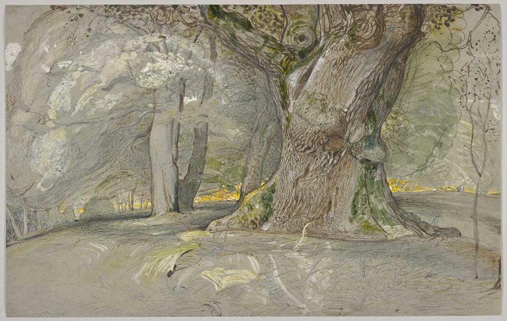 Oak Tree and Beech, Lullingstone Park, Samuel Palmer