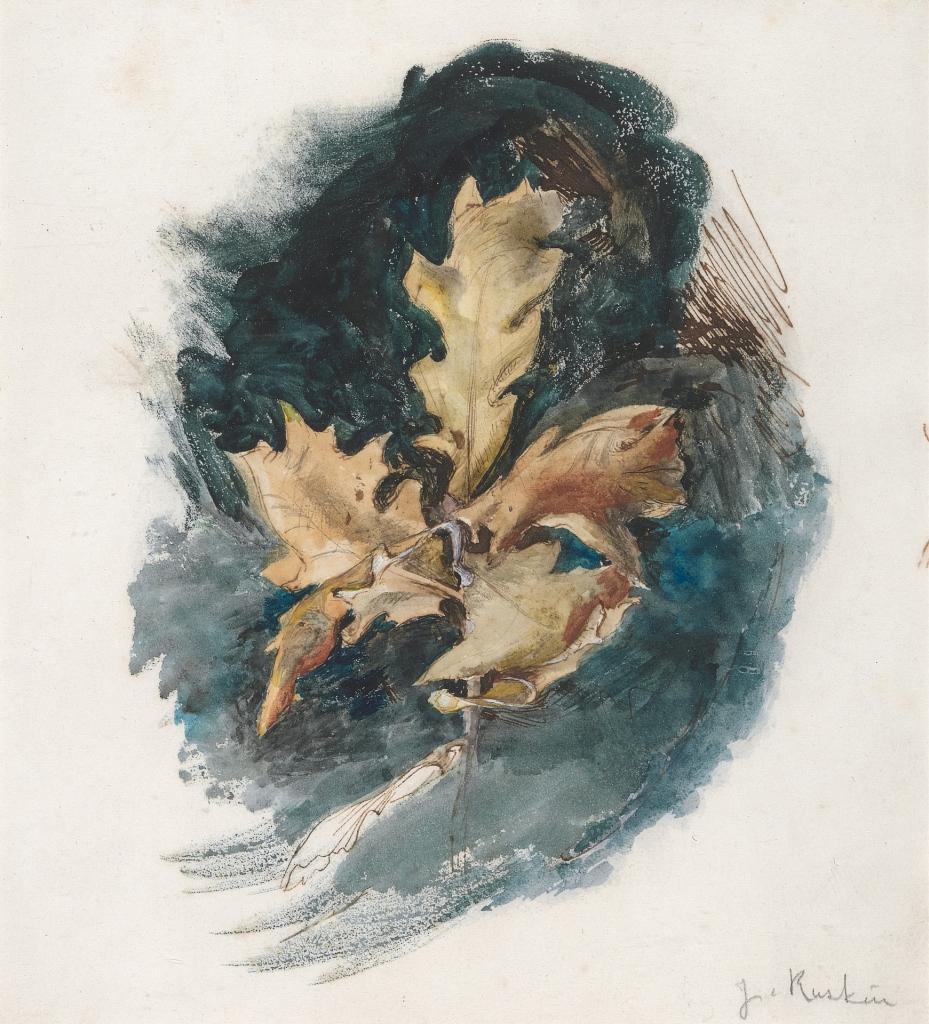 Study of an Oak Leaf, John Ruskin.