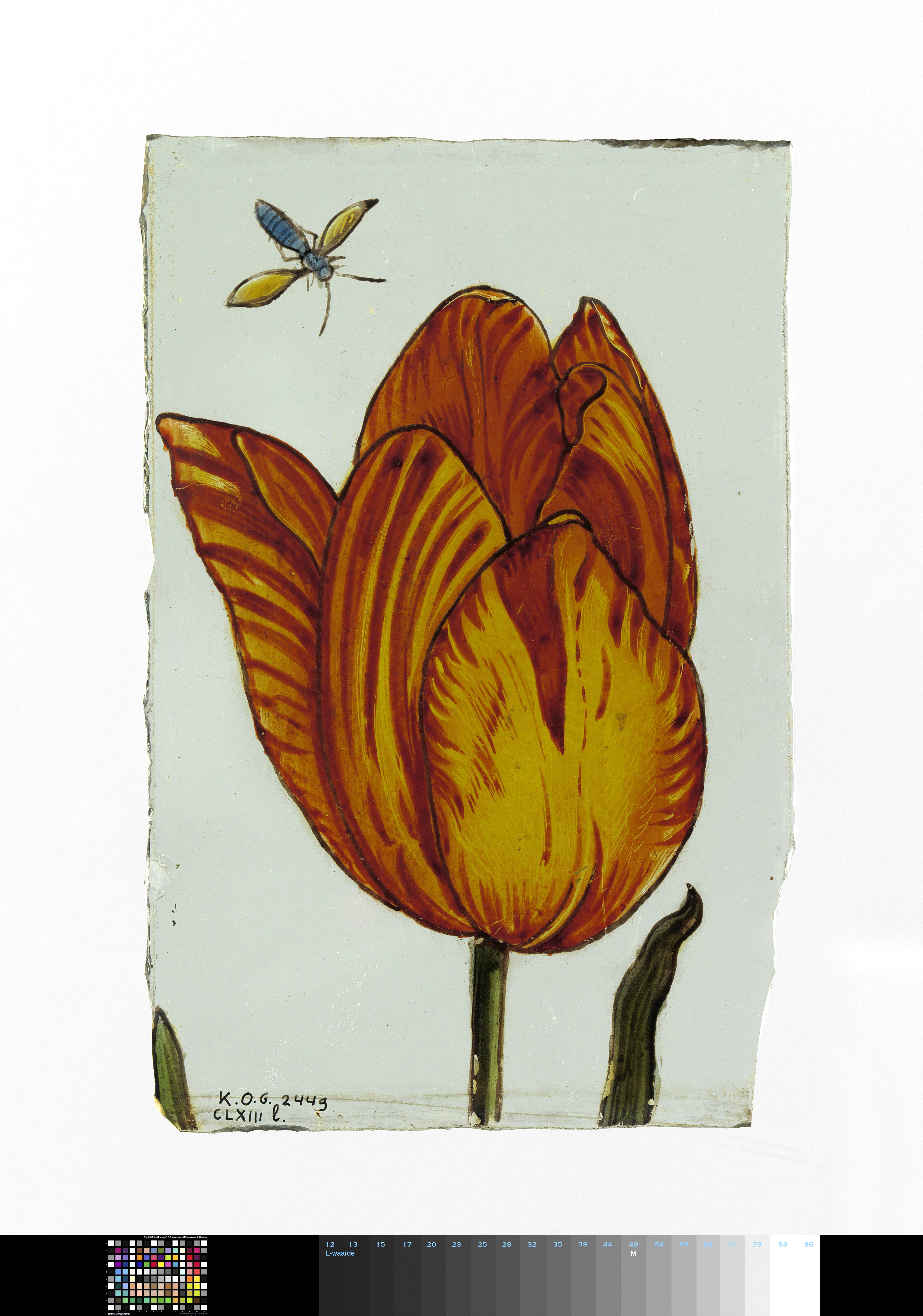 Glass painted with a Tulip and Insect