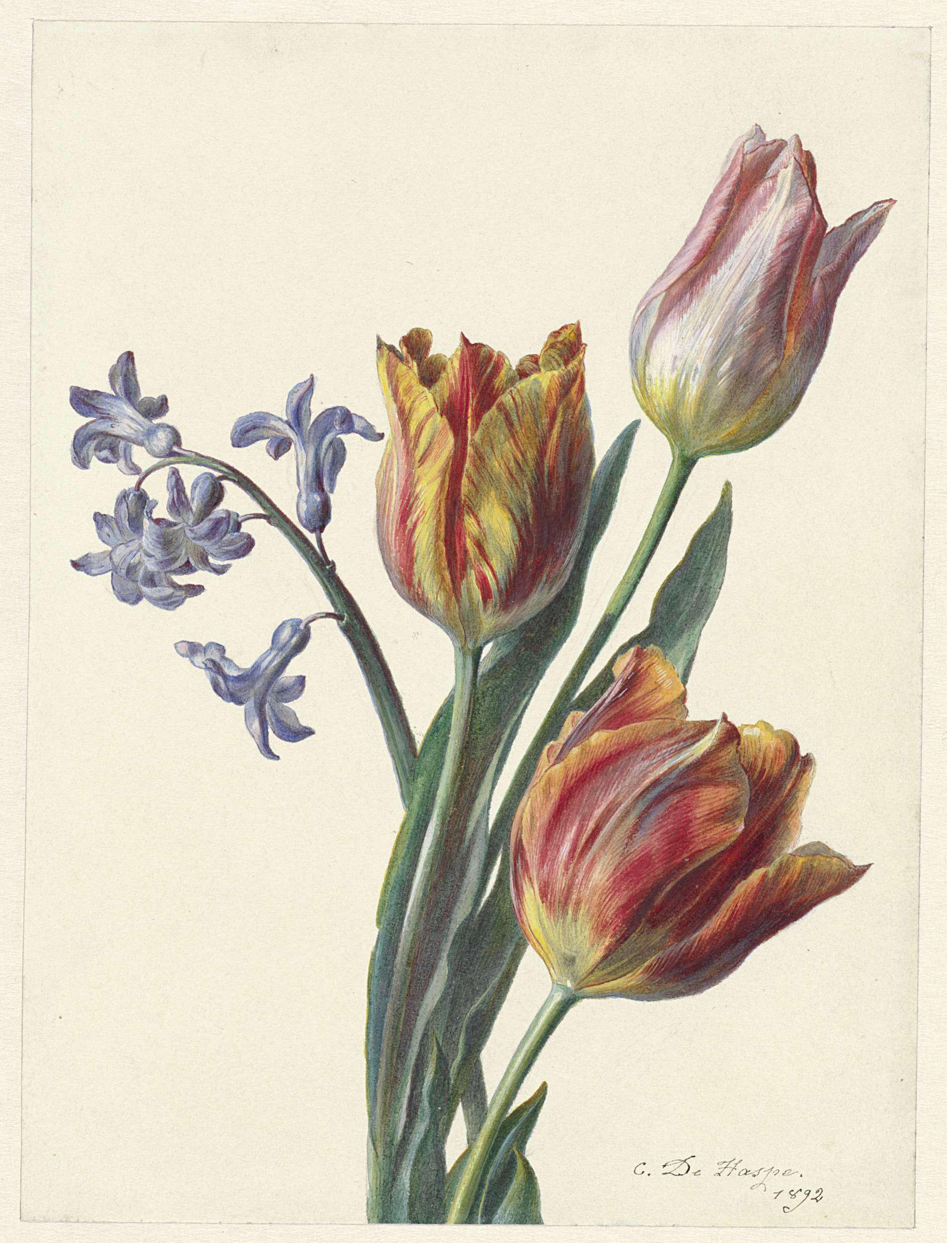 Three tulips and a hyacinth