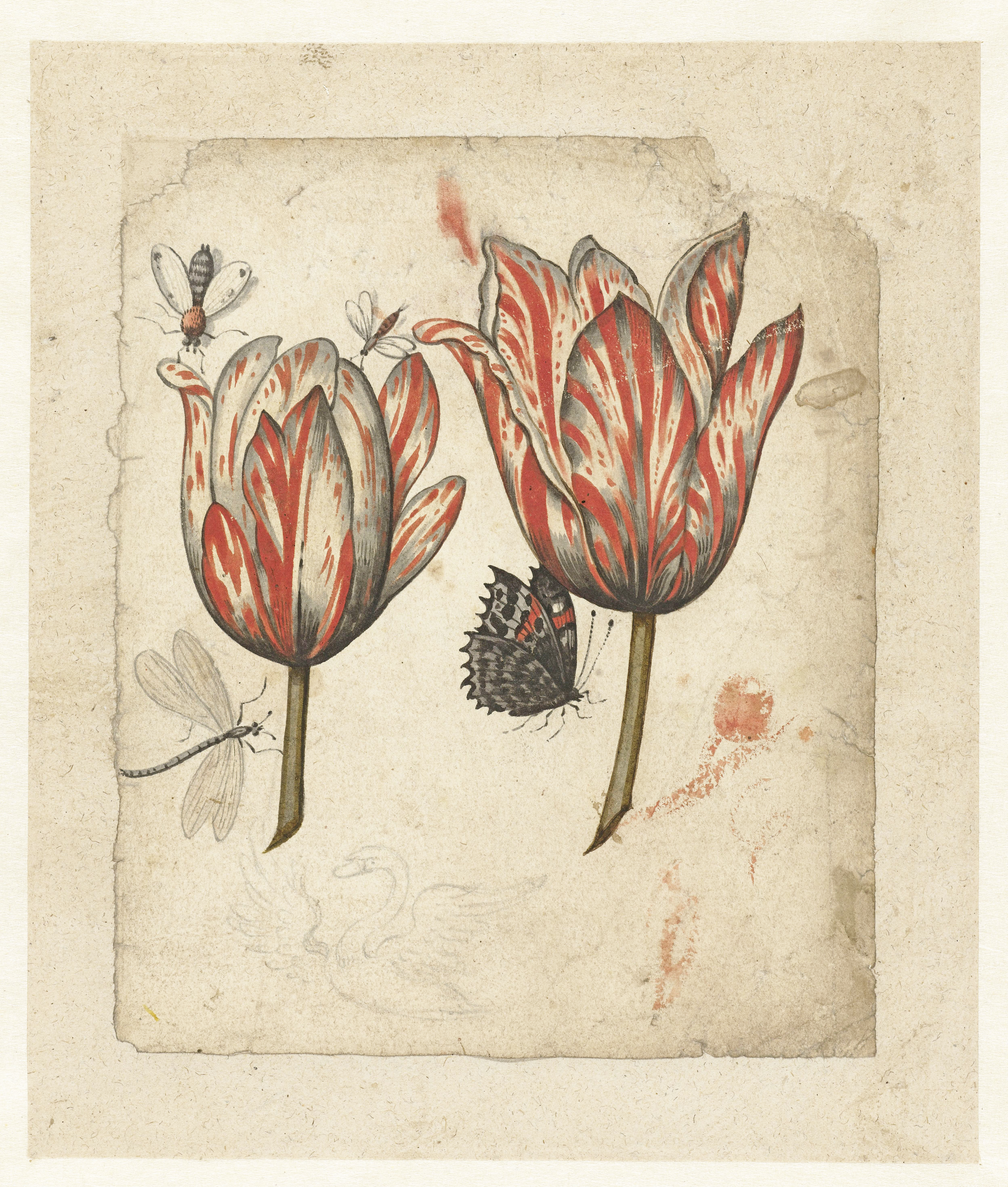 tulips and insects